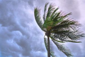 Wind resistance affects florida roofs
